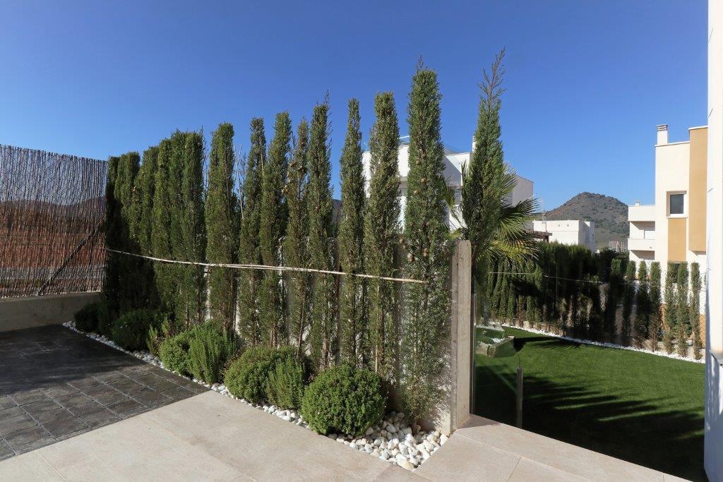Las Dalias 564131